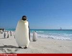 Gw_penguins_beach